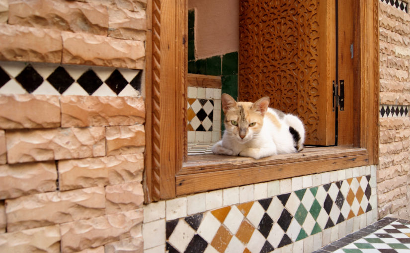 Handcrafted Zellige Tile Collection Celebrates Authentic Moroccan Artistry